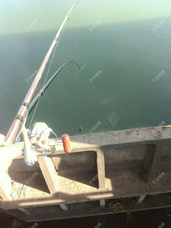 看看实战效果,上了一尾鲶鱼,一手拿筏杆,一手挑鱼,完美飞上岸,成功。