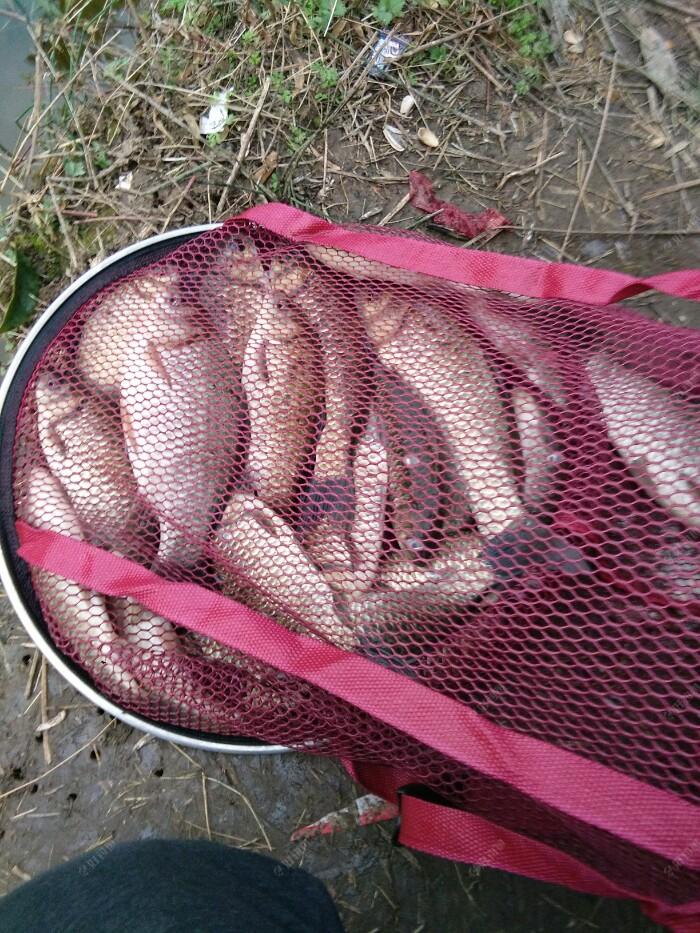 回到家称了一下除去鱼护的重量刚好八斤,朋友钓了16斤左右,我给朋友了50,钓鱼的时候和朋友说好了要是给钱我们平分,钓的全部是野生鲫鱼,虽说给钱了,但也值得