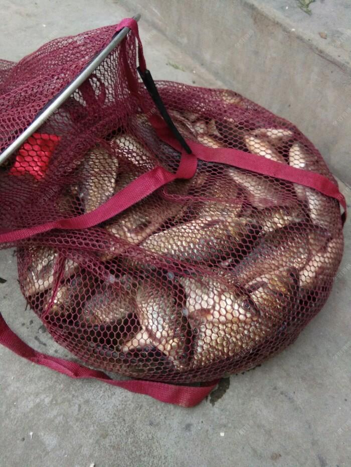 在水库钓的鱼是用江湖猎人5.7米,给力回鱼快,游刃有余,