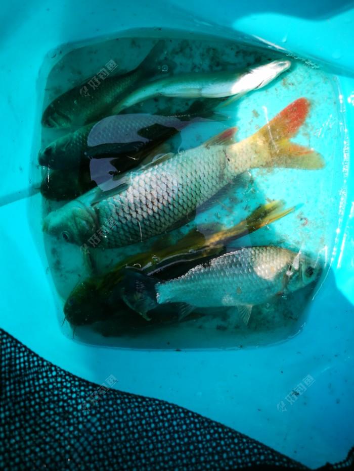 清明时节好钓鱼,钓币鱼获双丰收