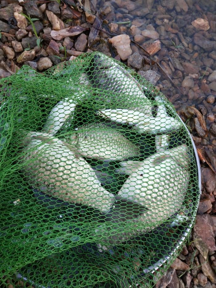 """""""渔者""""今天的鱼获"""