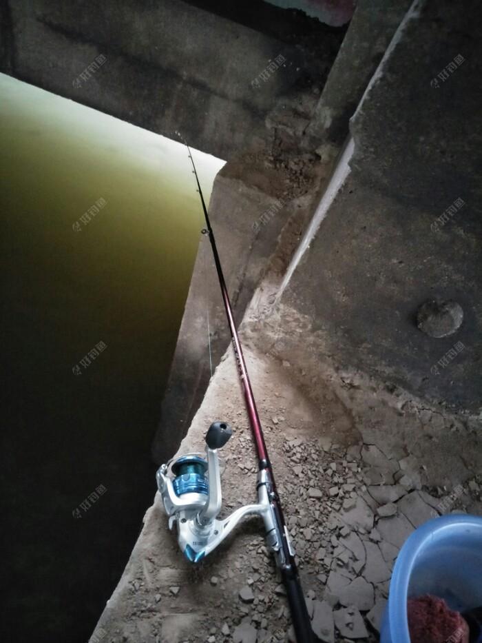 上了3条鱼以后就停口了,刚来的时候有点热热的,天一下子就黑了下来,换了几个位都没口,只好跑到深水区来试试,也没口,在场的钓友都没什么口了