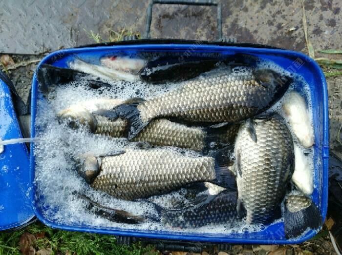 这鱼获漂亮吧,这鱼塘很少人钓,是熟人可以钓,我也不想钓大的,是因为鲫鱼好吃一些,所以今天主钓鲫鱼为主,这鱼力度还不小呢。希望那些少钓鱼的钓友也常去钓钓鱼,真过瘾