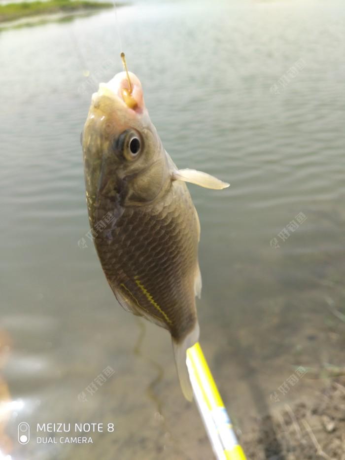 一方河水养一方鱼