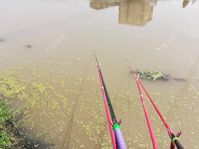可惜好景不长,两钓友过来刚下好竿河水开始走水了,风也大起来了,漂也立不住了