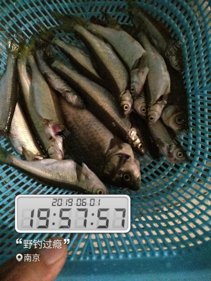 鱼获不要多,够吃就行!