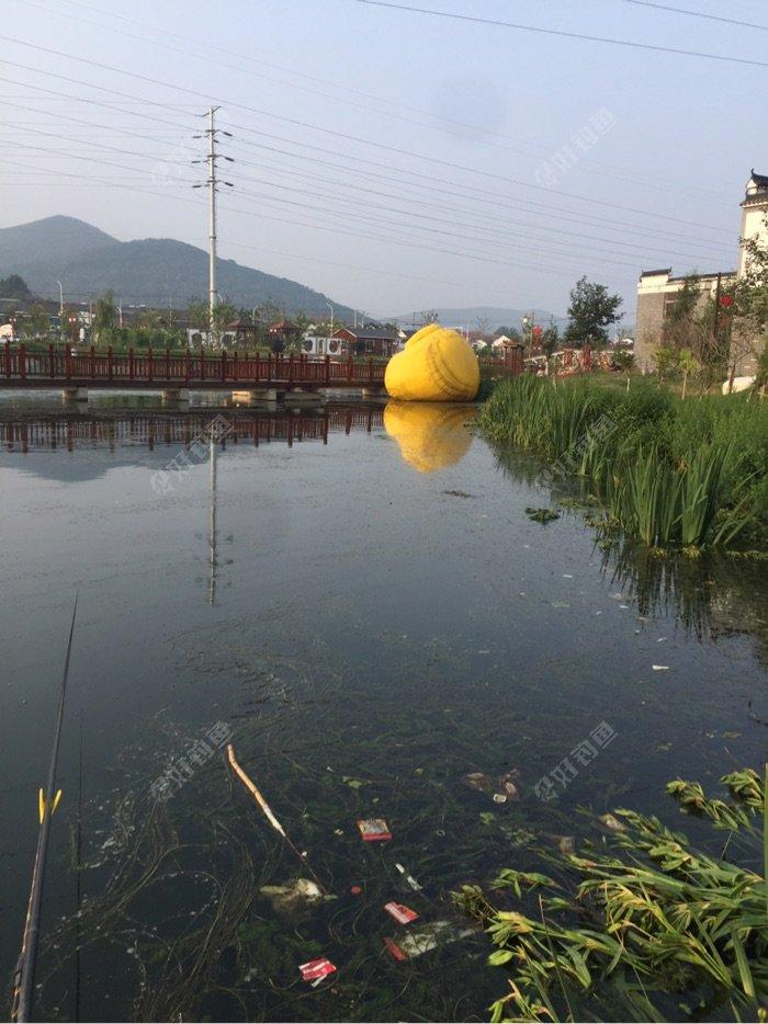 现场情况发生了变化,朋友们发现了吗,大黄鸭已经完全倒伏在水面上。