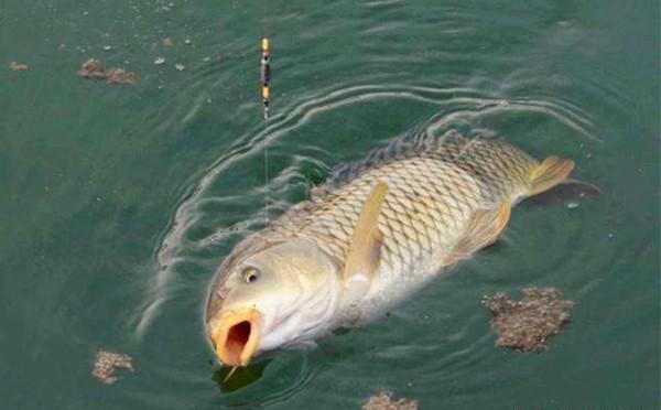 野釣選擇釣位時要注意這四個要點