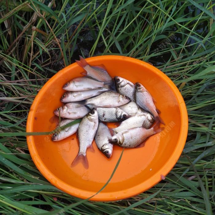 一共二十尾鲫鱼