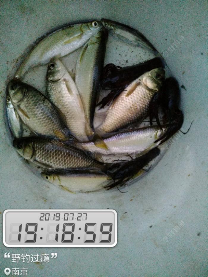 鱼获不多,品种不少!