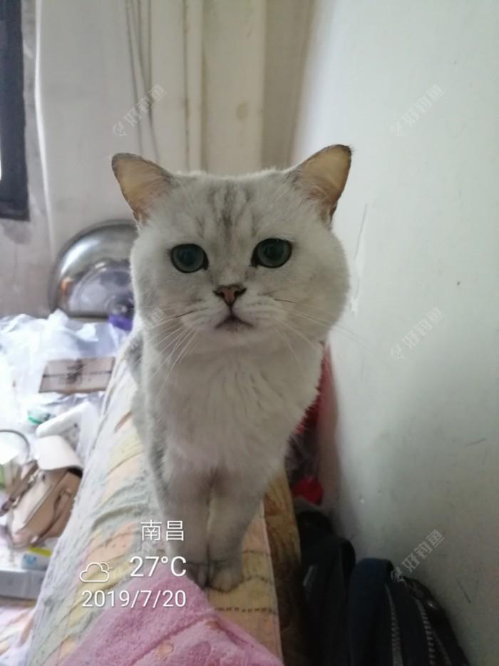 朋友家的猫咪镇楼🥰🥰