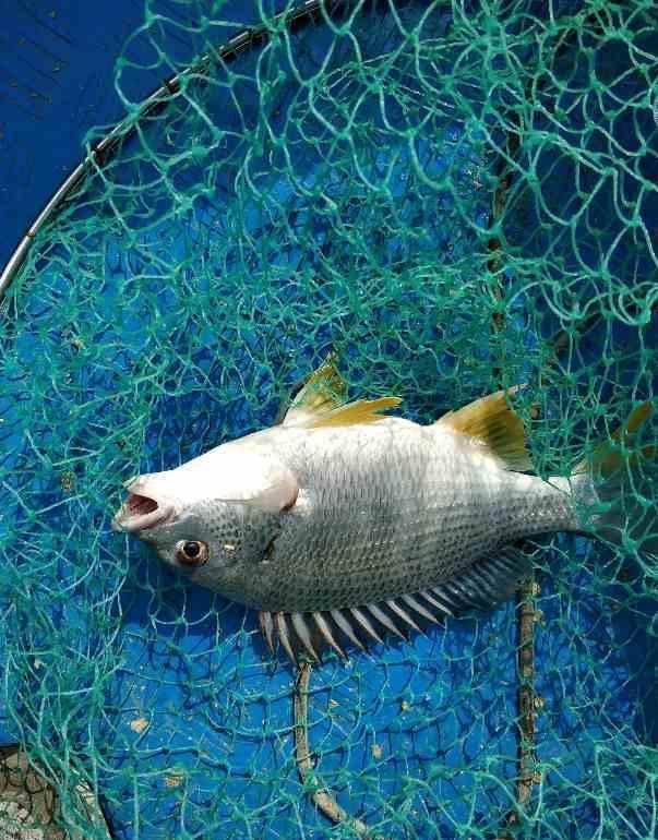 海釣作釣操作方法介紹-筏釣