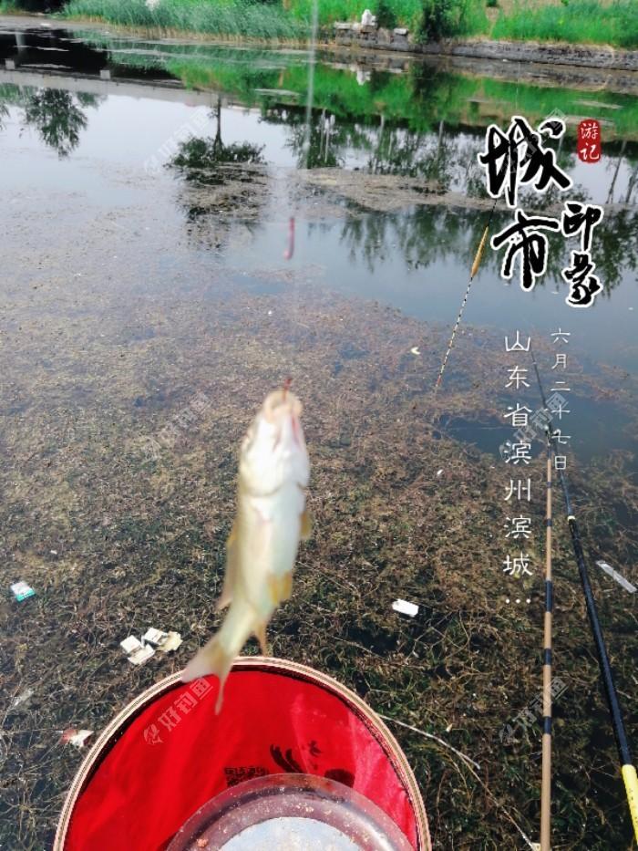 北外环,今年夏天以来跑鱼无数的钓点,水草茂盛!