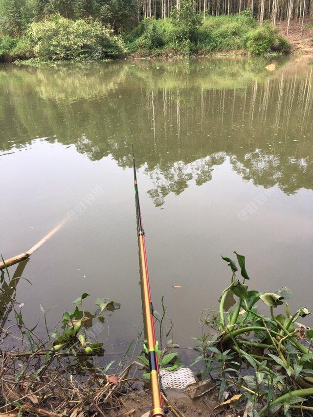 水深2米7左右 下钩2米4左右 无需到底否则容易挂到竹子或者窝里的玉米叶子 窝里有鱼就容易惊窝了