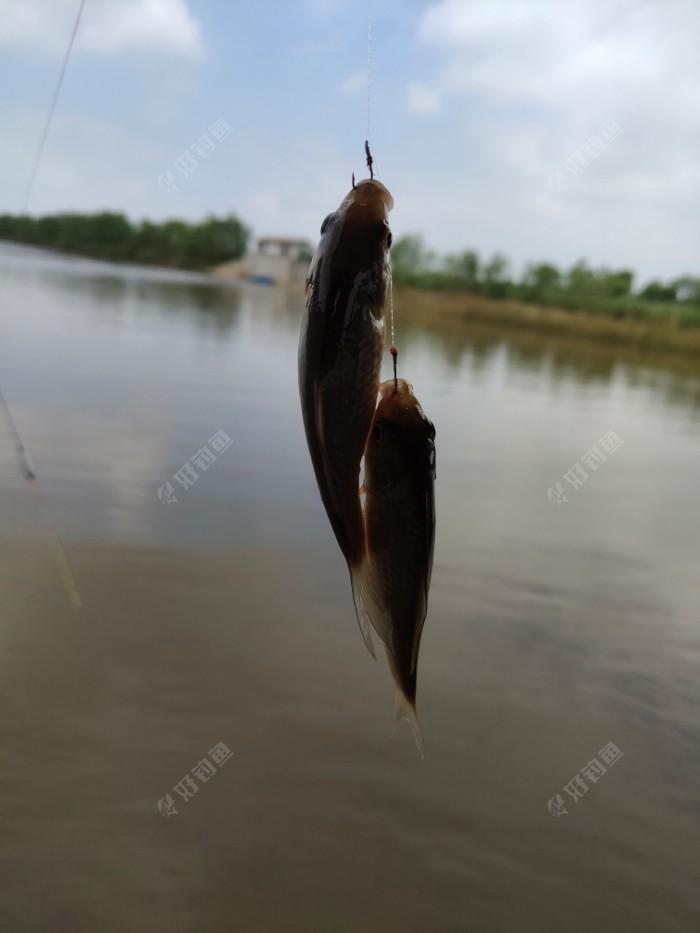 双飞小鲫鱼