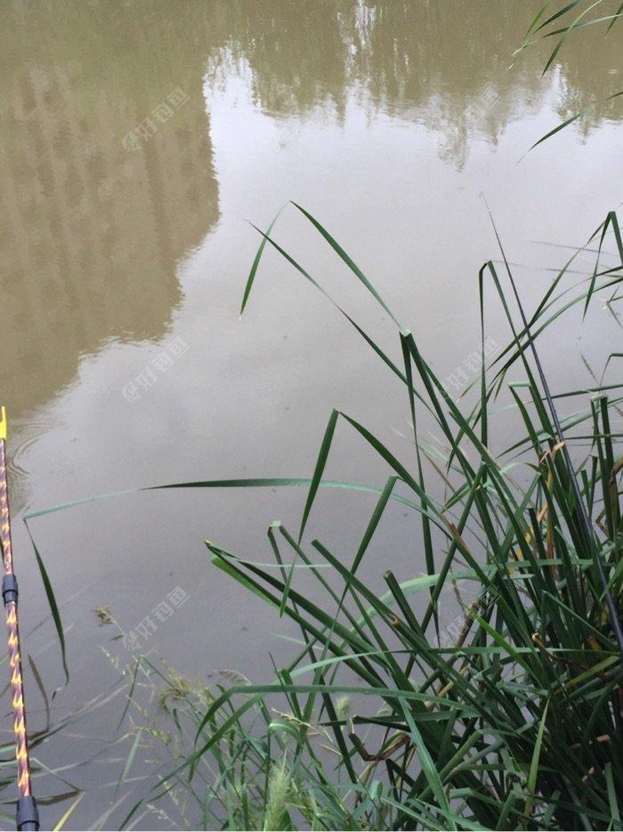 雨后鱼儿非常有口