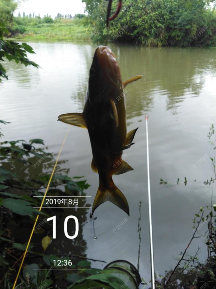 开钓一分钟就上鱼了