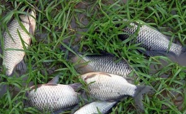釣魚空竿的原因和應對方法,只需4招