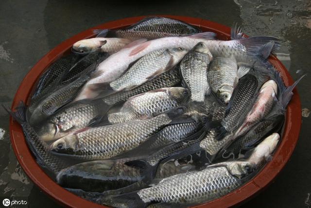 秋季如何才能有更好的鱼货,送上秋钓鲫鱼饵料配方