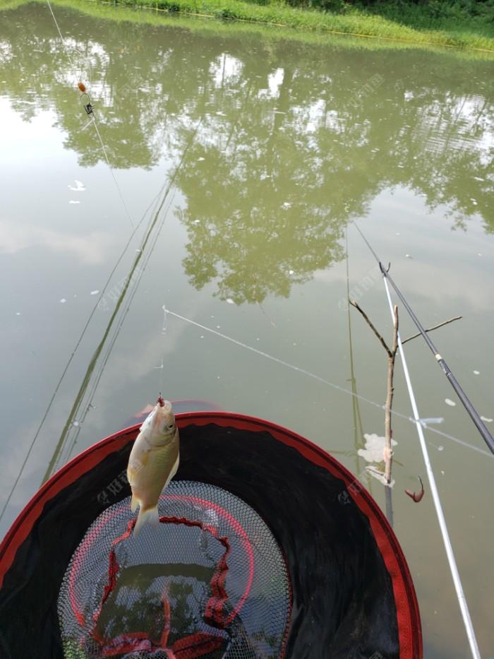 串钩上的小鲫鱼