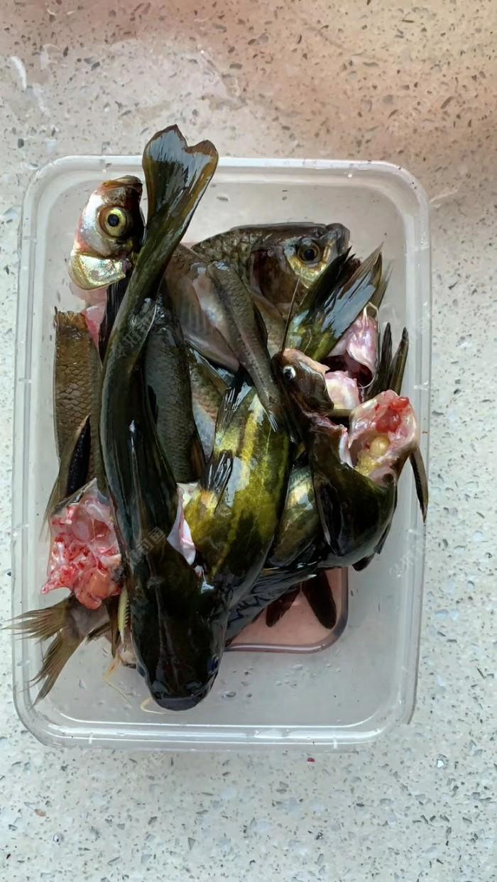 癮大也只能忙里偷閑,這幾條魚也能解饞了