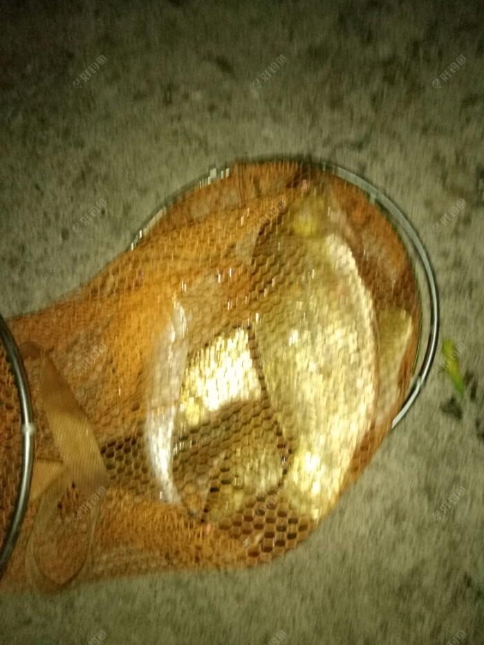 今晚的鱼获