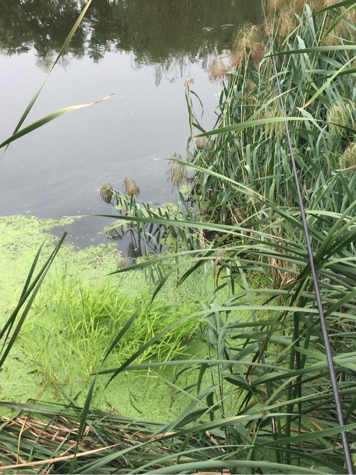 草头水有六七十公分深