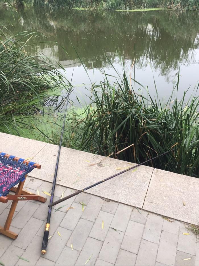 我的钓点,一根五米四的鱼杆,一根四米五的鱼杆,一个钓草头,一个钓平台浅水区域。