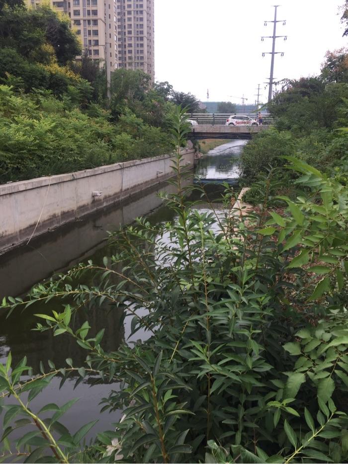 这里老朋友都不陌生,以前发帖时经常见到的小河,非常好的钓鱼场地。