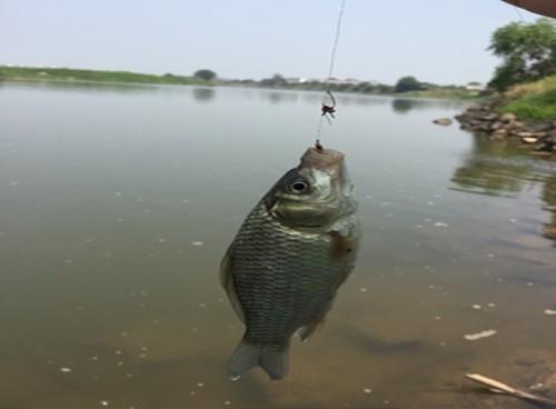 秋季野釣鯽魚哪些很重要?老釣友解析野釣鯽魚的兩大技巧