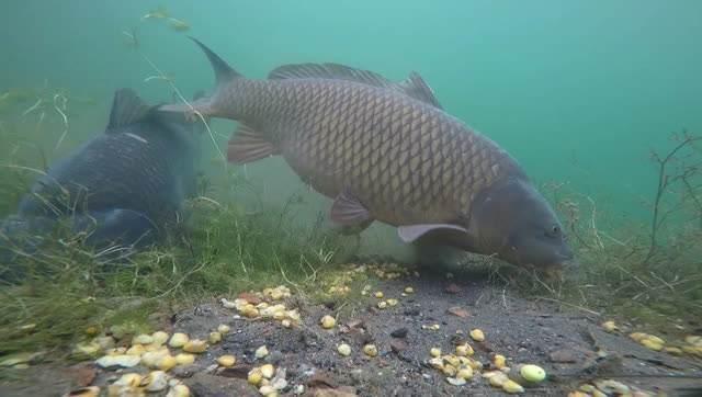 鱼吃钩的几种讯号,看明白能更好的钓鱼
