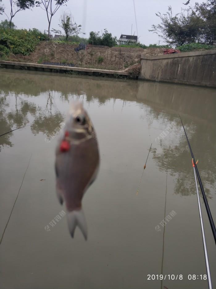 最后一条收竿鱼,谢谢陪我玩了一个早上…