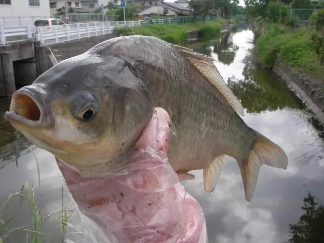 釣魚有哪些技巧是高手知道,而新手不知道的