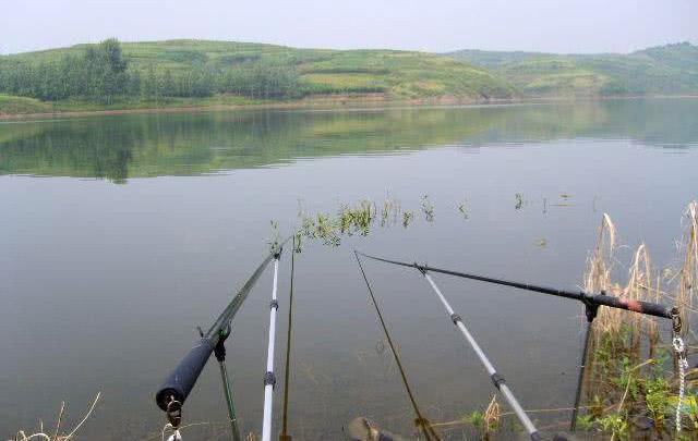 钓鱼小细节:各位钓鱼人,抄鱼时先抄鱼头,还是抄鱼尾?