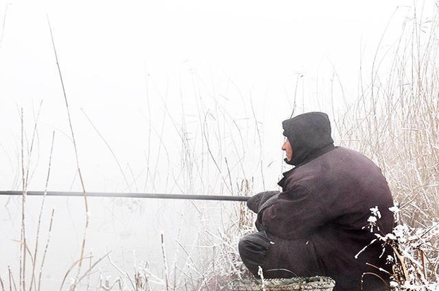 为何天越冷鲫鱼越好钓,想知道原因的看过来