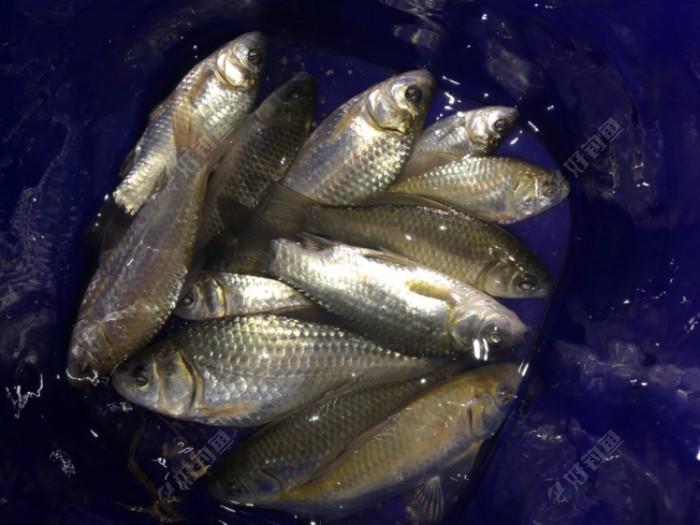 鱼获不好不坏