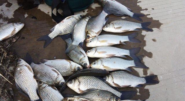 也只有钓鱼人,才会用这8种东西做钓饵,虽其貌不扬但钓效好