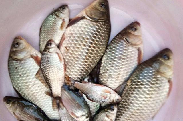 野钓大鲫鱼饵料配方分享,四季钓鱼都能用