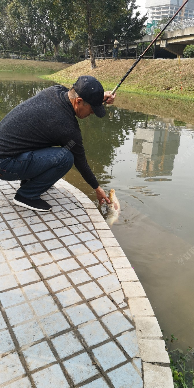 我用手轻轻地把鱼儿拿了上岸,现在他是非常的听话,好大一条鲤鱼,大概得在三斤以上,