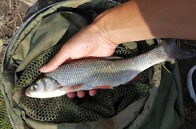 华子鱼的生活习性是什么?钓华子鱼的技巧与路亚(图6)