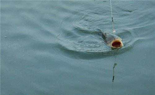 你以为浮漂走水,仅仅是漂目打斜,观漂不易么