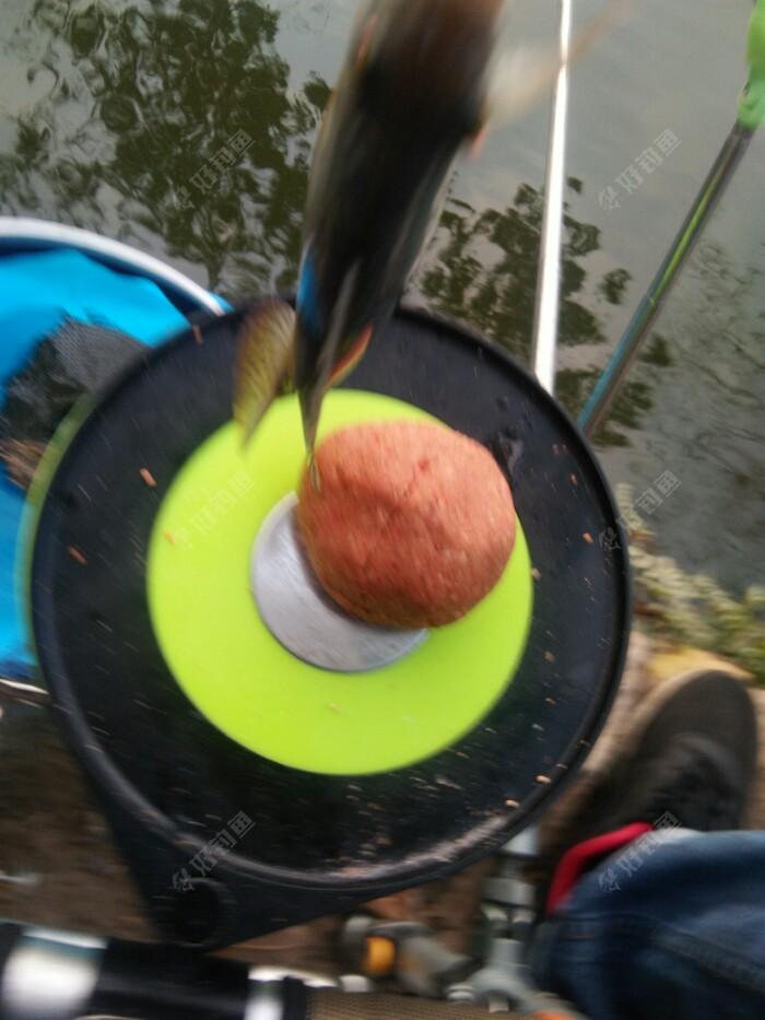 网工扫荡后依然还有鱼获
