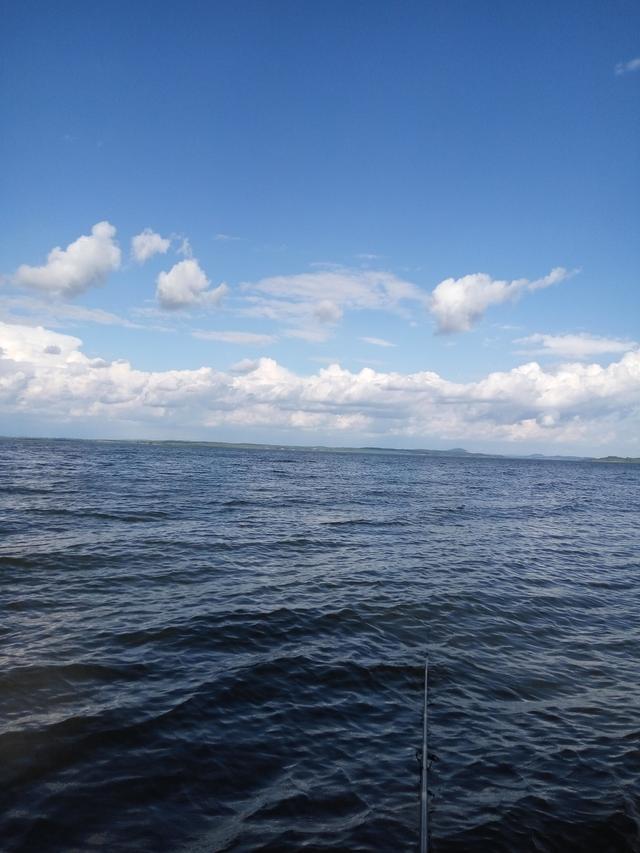 野生鱼儿可不一定喜欢渔具店里卖的饵,得看水里有啥