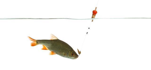从调四钓二分析,钓过灵和过钝对鱼情的影响
