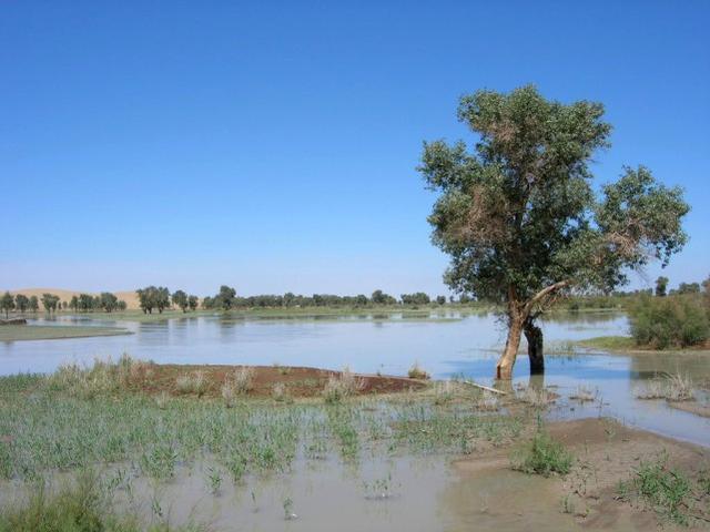 沙漠中也能钓鱼,塔里木河鱼多且肥