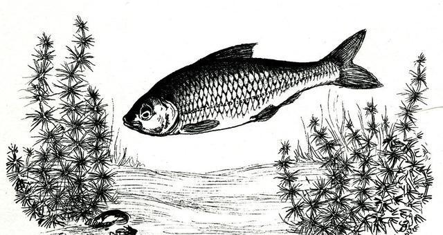 钓土鲮如何提高命中率及渔获?从选装备开始