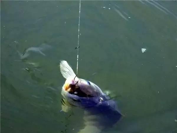 脱钩跑鱼了,这些鱼钩上的细节,就必须了解