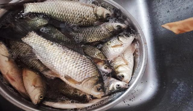 好方法在家做出窝料,穿透力强诱鱼快,还省钱