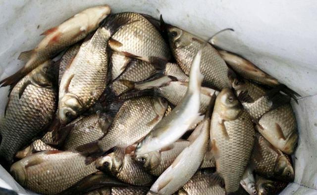 饵料有几种,钓鱼如何选饵料?这些答案在这里