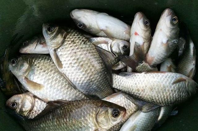 剩菜剩饭做窝料,起初被人嘲笑,渔获给我了满足